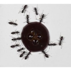 KKmoon DIY T-Design Zone dalimentation en acrylique pour animal domestique Maison de fourmis Cadeau danniversaire